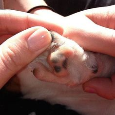 The Dog With A Paw Print On Its Paw.   21 Things That Make Absolutely No Sense