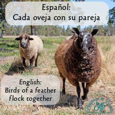 Cada oveja con su pareja / Birds of a feather flock together. Spanish sayings / refranes en español. www.shenvalleylang.com Shenandoah Valley Language Services