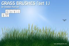 Nice Free Grass Brushes Set 1. This is a set of 6 grass brushes that I use in my digital artwork. They can be used to add realism and give your artwork a more natural painterly feel. These brushes are free for personal or commercial use. Enjoy!  #blade #fields #grass #Grasses #green #ground #leaf #nature #of #prairie #weeds Check more at http://psdfinder.com/free-psd/free-grass-brushes-set-1