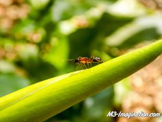 A pic of mine from #descansogardens - #m3imagination #naturephotography #nature #bugs #insects #agameoftones #ig_masterpiece #ig_exquisite #ig_shotz #global_hotshotz #superhubs #main_vision #master_shots #exclusive_shots #hubs_united #jaw_dropping_shotz #worldshotz #theworldshotz #pixel_ig #photographyislifee #photographyislife #photographysouls #photographyeveryday #photographylover #worldbestgram #iglobal_photographers #ig_great_pics #ig_myshot #shotwithlove #justgoshoot #xposuremag…