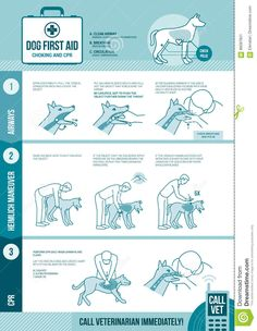 Dog cpr and first aid, pet emergency procedure for chocking and reanimation with stick figures The Snake, Dog Care Tips, Pet Care, Pet Tips, Dog Heimlich, Pet Sitter, Dog Body Language, Dog Facts, Cat Dog
