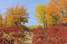 """""""Climbing Hallaway Hill"""" photo by Penny Meyers.  Prints and greeting cards available.  #maplewood #minnesota"""
