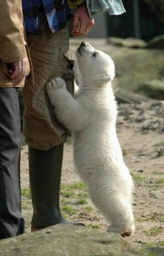 Warm, white and fuzzy cub.