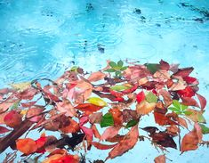 Autumn leaves in swimming pool under rain. Photo made with my mobile phone for Art Fields Photography Project.  #southafrica #naturephoto #outdoor #outdoorphotography #autumn #autumnleaves #rain #swimmingpool #ArtFields #photographyproject #mobilephotography #fundraising #gofundme Photography Projects, Outdoor Photography, Mobile Photography, Rain Photo, Photo Diary, Go Fund Me, How To Raise Money, Nature Photos, Autumn Leaves