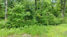SOLD - 9.94 acres, Dearhamer Rd, Bruce, WI 54819 MLS# 902727 $29,500