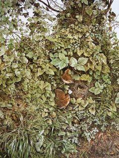Image result for lucian freud landscape