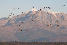 Grullas en la sierra de Gredos Sur Fuente: soyecoturista.com