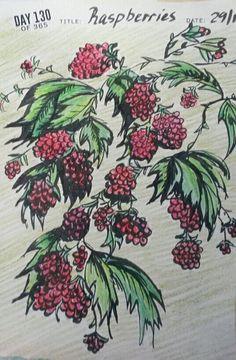 Raspberries drawing Raspberries, Rooster, Artworks, Brown, Drawings, Animals, Animaux, Art Pieces, Raspberry