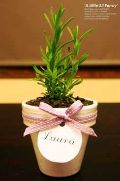 Lavender Potted Wedding Bomboniere / by BridesLittleHelper47