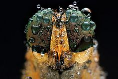Stunning Macro Photograph of Insect Eyes