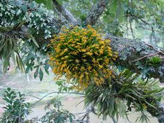 beautiful orchid on a tree branch, river from the field, Santa Catarina, Brazil