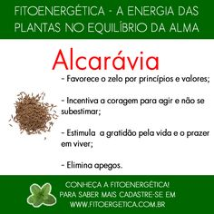 Alcarávia