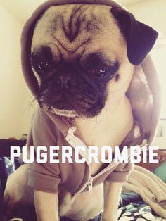 Pug, cute, animal, Abercrombie model, pug life, adorable