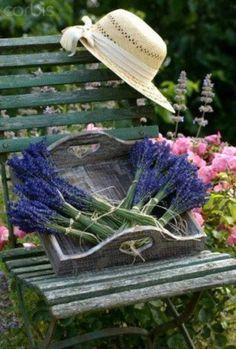 Lavender ✿⊱╮
