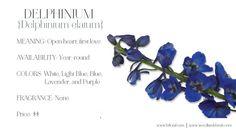 sunflower and delphinium bouquet - Google Search