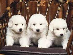 Afbeeldingsresultaat voor puppy