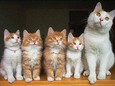 「ね、うちの子猫たち、かわいいでしょ?」誇らしげな親猫たちの写真いろいろ
