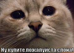 kupi-slona_1344603486