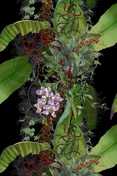Timorous Beasties Wallcoverings - Topical Tropical superwide wallpaper