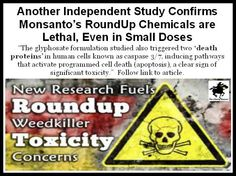 Another Independent Study Confirms Monsanto's RoundUp Chemicals are Lethal, Even in Small Doses. Read article here: http://www.thelibertybeacon.com/?p=26152