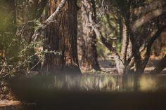 Project Bird Bath | Reflection by Kim Peterson