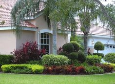 Contemporary shaded front yard landscaping ideas with palm tree
