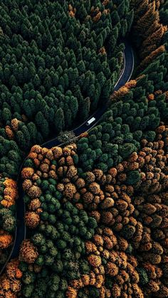 Trees as far as the eye can see