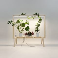 Since most people live a window-less work life, Johan Kauppi designed the GreenFrame for Glimakra of Sweden, which is a floor screen that acts as a window filled with plants. House Plants Decor, Plant Decor, Compound Wall Design, Floor Screen, Green Furniture, Home And Deco, Green Life, Plant Design, Flower Boxes