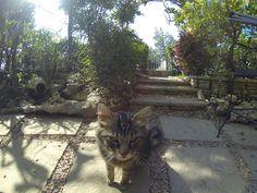 Zona Esterna...Ely ( gattina Dolcissima)