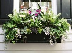 Exotic tropical windowbox using many 'indoor' plants (ferns, alocasia & orchids etc)