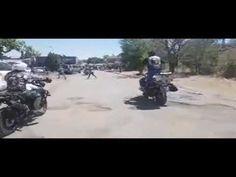 Dogs of War in Senekal - YouTube