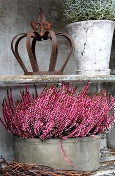 Beautiful French accessories. Rustic cachepot, the iron crown with a fleur de leis, lavender and rosemary. Perfect!