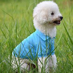 Pet Dog Cat POLO T-Shirt Multi-colour Puppy Casual Suit C... http://www.amazon.com/dp/B00SMRVIBI/ref=cm_sw_r_pi_dp_739oxb0VXBE55   600 each
