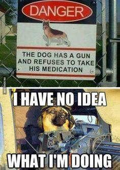 Oh so doge