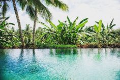 Wish I Was There, Ubud, Bali, Instagram Posts, Plants, Summer, Colors, Summer Time, Flora