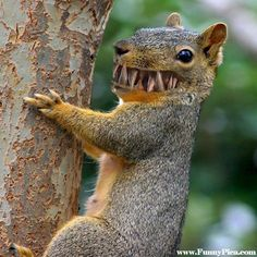 Funny Squirrels – Funny Squirrel Picture 81 (FunnyPica.com)