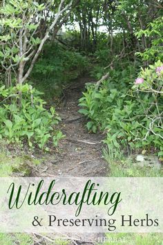 Wildcrafting & Preserving Herbs -- Learn how to forage and preserve your own herbs from the wild.