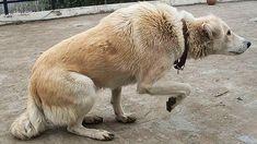Dealing with dog hair Polar Bear, Corgi, History, Joy, Youtube, Ideas, Dog Owners, Body Language, Dog Stuff