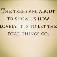 the trees are about to show us how lovely it is to let the dead things go