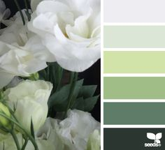 I don't usually like greens, but I like this color palette a lot. #colorpalette