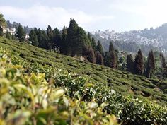 #BURUNDI #SWD #GREEN2STAY Tea Plantations Among the vallies of mountains and thermal springs, the tea plantations of Teza and Rwegura exhibit some of the most beautiful landscape in all of Burundi. Get a tour of a tea estate and bring a camera.