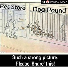 So true. The dogs at the pound are so loyal. The ones at the store don't like people.