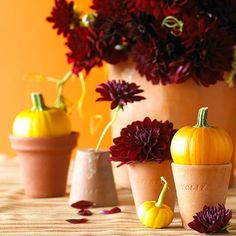 Set pumpkins in or atop pots, and pair with an explosion of rich burgundy dahlias accented with pumpkin leaves: http://www.bhg.com/decorating/seasonal/fall/pretty-pumpkins-for-fall/?socsrc=bhgpin092414gardenparty&page=20