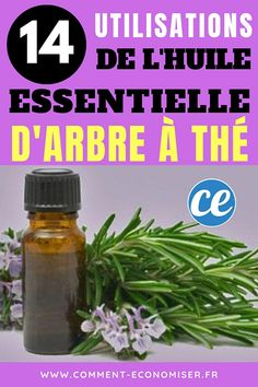 Tea Tree Essential Oil: 14 Uses You Should Know Absolutely. Huile Tea Tree, Tea Tree Oil, Tea Tree Essential Oil, Essential Oils, Health Icon, Coaching, Tee Tree, Health Logo, Health Facts