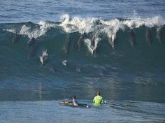 "Dolphins ""surfing"" in San Diego"