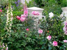 Foxgloves and Roses....beautiful combination (Greyton)