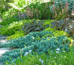 Stunning example of a tapestry of mat-forming plants. Juniper, Coral Bells, creeping jenny, and creeping phlox