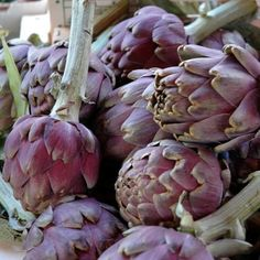 Artisjok en de nauw verwante kardoen,werden al door de Grieken en Romeinen als groente gekweekt. De gesloten bloemhoofden worden gekookt en warm gegeten,koud met een vinaigrette. Geneeskrachtige plant,cholesterolverlagend,goed voor de spijsvertering,galblaas,lever. Oogsten late nazomer.