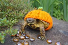 Hey, I found this really awesome Etsy listing at https://www.etsy.com/listing/166028339/orange-pumpkin-tortoise-cozy-made-to