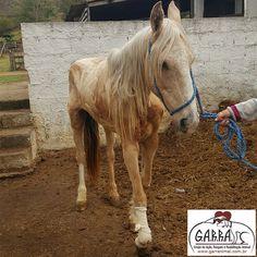G.A.R.R.A. - Grupo de Ação, Resgate e Reabilitação Animal: Eros está pedindo ajuda aos amigos do G.A.R.R.A.